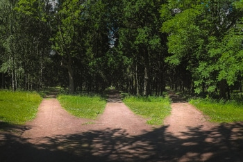 Three roads in the forest, choice of path. Three forest roads converge into one.